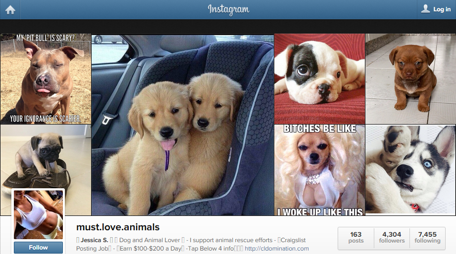 must_love_animals_